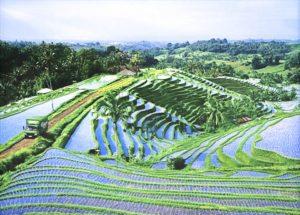 Вьетнам-отдых-рисовые-поля-Архитектор-туризма